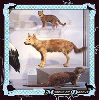 Museum Of Dannys